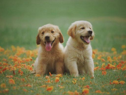 ser feliz con mascotas
